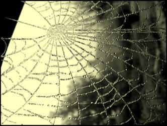 frosty spiderwork II by hanuschni