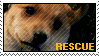 Stamp - Rescue Dog by MauserGirl