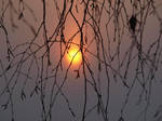 Tree and Sun by schu-r