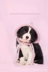 Border Collie Puppy by KiwiTakeFlight