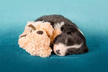 Puppy and Teddy by KiwiTakeFlight