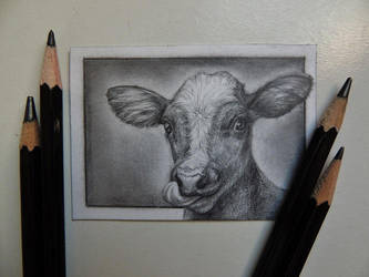 ACEO - Portrait of a Calf by paintbigflowers