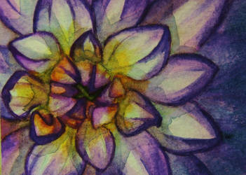 A Study in Purple ACEO by paintbigflowers
