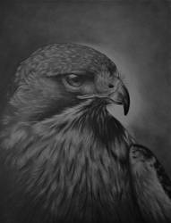 Red-Tailed Hawk Portrait by paintbigflowers
