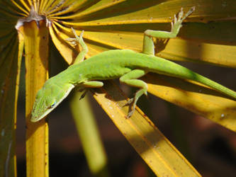 Green Anole by usoutlaw