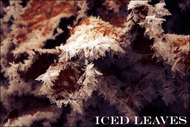 Iced Leaves by Tilyoko