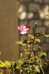 Blooming by Arayashikinoshaka