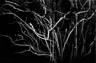 Creepy by frankmarlowe