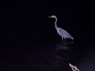 Bird by Castro99
