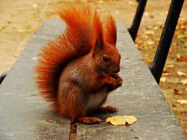 squirrel by DokuYaku