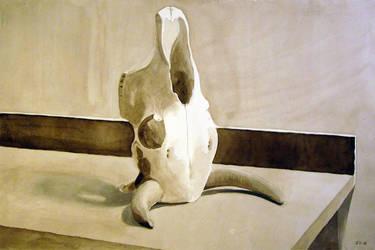 Cow Skull by ericdgreene