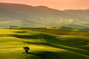 Shades of Green II by Addran