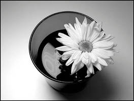 flower in a glass by Tlemetry
