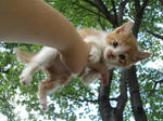 A Treetop View by pikachuafwc