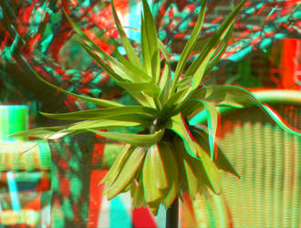 Flower 3D Anaglyph by yellowishhaze