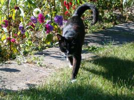 Cat in the garden by parsek76