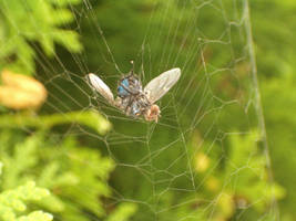 Caught in the web by parsek76