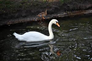 White Swan by parsek76