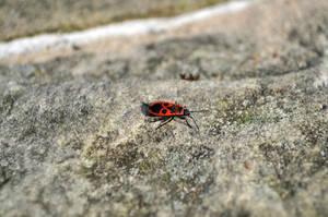 Some bug by parsek76