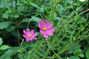 Flowers 13 by parsek76