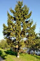 Lonely tree by parsek76