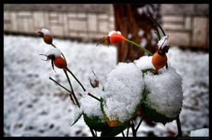Winter is coming 1 by parsek76