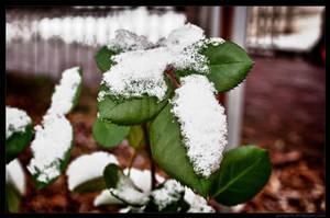 Winter is coming 2 by parsek76