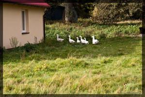 geese by parsek76