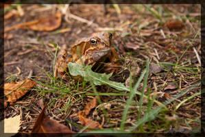 Frog 2 by parsek76