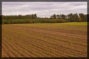 Field by parsek76