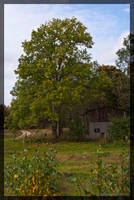 tree and a ruined house by parsek76