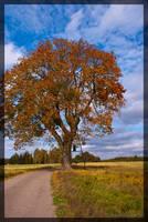 Colorful tree by parsek76