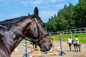 Horse 02 by parsek76