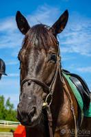 Horse 03 by parsek76
