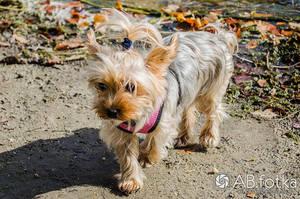 Cute little doggie by parsek76