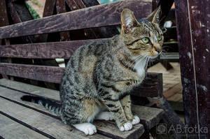 Cat 01 by parsek76