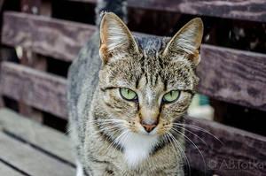 Cat 02 by parsek76