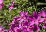 Purple flowers by parsek76