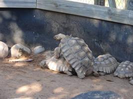 Tortoise Turtle Stock 1 by FantasyStock