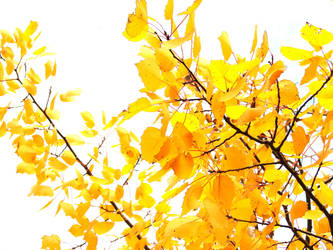 Golden Leaves of Autumn 2 by FantasyStock