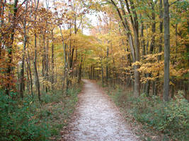 Autumn Forest Landscape 21 by FantasyStock