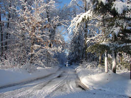 Wisconsin Woods Winter Road 5 by FantasyStock