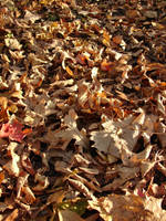 Fallen Autumn Leaves Texture 2 by FantasyStock