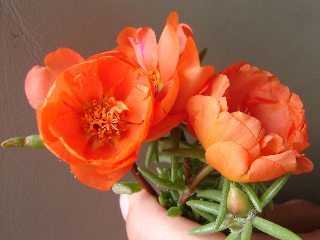 Pretty Orange Flowers By Fantasystock On Deviantart