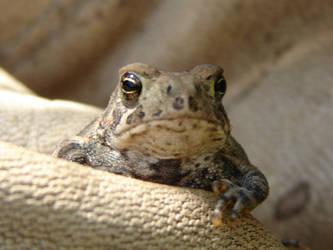 Tiny Toad 4 by FantasyStock