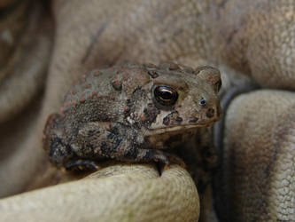 Tiny Toad 7 by FantasyStock