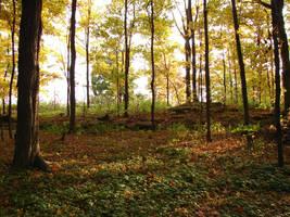 Woodland Trail Landscape 09 by FantasyStock