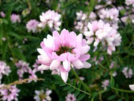 Flowers in a Field 1 by FantasyStock