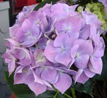 Purple Flowers 2 by FantasyStock