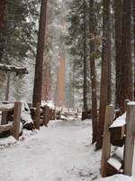 Sequoia National Park 1 by FantasyStock